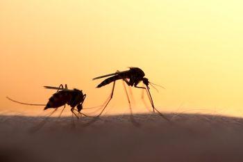 10 مورد از عجیب ترین تحقیقات علمی سال 2019