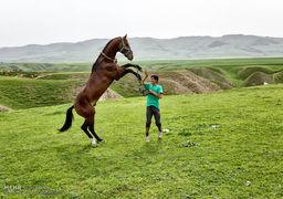 گرانترین مسابقه اسب سواری در عربستان