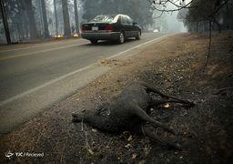 تصاویر آتش سوزی گسترده در کالیفرنیا - آمریکا