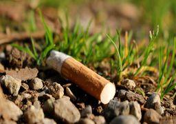 سوسک سیگاری غوغایی در اینترنت به پا کرد! + فیلم و عکس