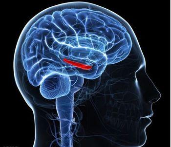 از علت تا درمان کم شدن حافظه
