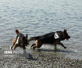 آمادهسازی سگهای هلالاحمر پایتخت