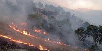 آتش جنگل خائیز را دوباره در بر گرفت/محیط زیست: ملتمسانه از مردم تقاضای کمک داریم